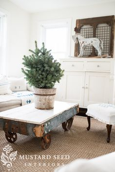 Tree in olive bucket must do this is for ann green - Mustard seed interiors ...