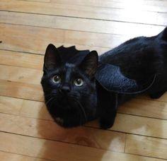 最後に、単に獣-友人、永遠にあなたと一緒にいたい、このエレガントなドラゴン。 | 15 Photos Of Black Cats Who Are…