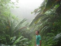 Surrounded by enormous foliage in the Caribbean island, Saba, as we hiked the island's main trail to the top of Mt. Scenery.