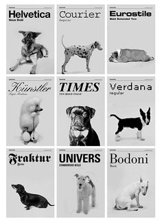 What typeface is your puppy dog?