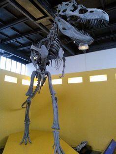 - #Albertosaurus