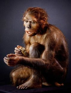 Homo Habilis Lived c. 2.33 - 1.44 million years ago.- Hominid Reconstructions Are A Blast From The Past (16 pics) - Orrazz