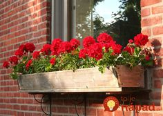 Flower box preparations – summer window and balcony decor ideas - Decoration 4 Balcony Flower Box, Window Box Flowers, Balcony Garden, Garden Pots, Wooden Window Boxes, Wooden Flower Boxes, Deck Railing Planters, Window Planter Boxes, Front Garden Landscape