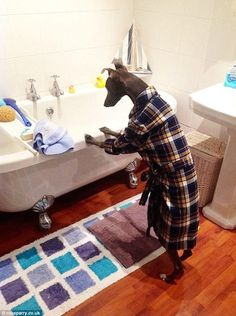 Rupert the Dog Likes Doing Regular, Everyday Tasks Like a Human (PHOTOS)