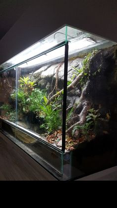 The Effective Pictures We Offer You About Lizards tank ideas A quality picture can tell you many things. Terrariums, Tree Frog Terrarium, Terrarium Reptile, Les Reptiles, Reptiles And Amphibians, Vivarium, Rabbit Cages, Home Lizard, Animals