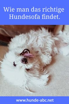 Wie Man Das Richtige Hundesofa Findet In 2020 Hund Sofa Hundesofa Hunde