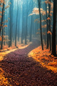 zoomw0rld:  Call of wandering | Janek Sedlar  …[wonderous-world][denlArt]