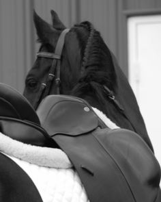 You can't fake being an equestrian. Only confident and caring people are successful at it. You have to be confident to ride and caring to actually take care of your animal. Met too many wannabes in my time!