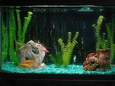 29 Gallon Fish Tanks (page 7) | RateMyFishTank.com