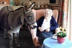 I was surprised the first time I ever saw a picture of a donkey/mule inside a house. But, they go in houses, hospitals, schools, even libraries pretty often. :)