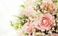 Close Up Flower 5 Best Free Beautiful Nature Widescreen Wallpaper For Desktop