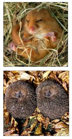 Instructions and images for making a Hibernation Discovery Box. A good resource to have to enhance learning about hibernation.