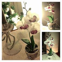 Orchidea bianca linea 'Cuore'