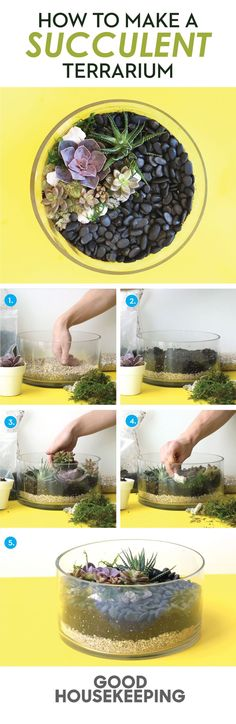Make your own succulent garden by layering sand, soil, and stone. More