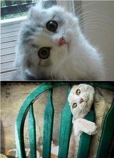 E agora? como é que ele sai dessa enrascada?  #Hao123Fofurinhas @Cats @love