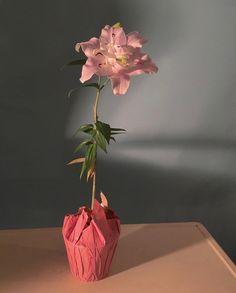 Flower Catalogs, Instagram Bio, Girl Next Door, Vase, Florals, Photography, Home Decor, Floral, Photograph