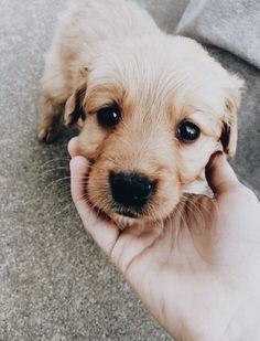 Discovered by n2srin 3bd. Find images and videos about dog and cute on We Heart It - the app to get lost in what you love.