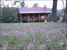 Two Parents, a Kid, and One Tiny Cabin - http://survivingthesheep.com/two-parents-a-kid-and-one-tiny-cabin/