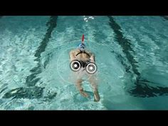 Front Crawl Swimming Drills | Glute Kick - YouTube