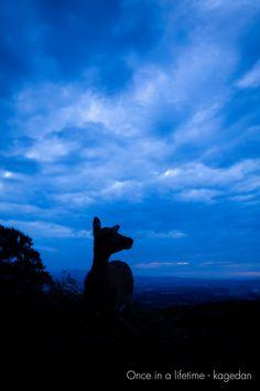 https://flic.kr/p/AHMSUX | 遠望 | 綺麗な夕焼けと撮りたかったです。