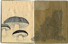 Book of mushrooms by Cecilia Levy #art #drawing #book #mushroom