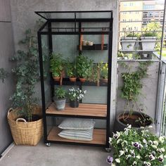 Diy Greenhouse, Most Beautiful Gardens, One Bed, Home Projects, Ladder Decor, Home Accessories, Terrace, Home And Garden, Vegetable Garden