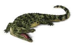 How to Draw Animals: Crocodiles, Alligators, Caimans and Gharials