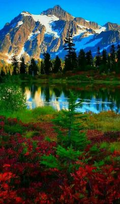 Nature Forest Lake Outdoors Ideas For 2019 Beautiful World, Beautiful Places, Beautiful Pictures, Cascade National Park, National Parks, Landscape Photos, Landscape Photography, Photography Tools, Photography Lighting
