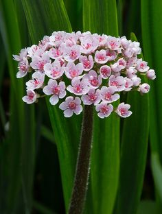 ~~Umbrella Plant by Canon user~~
