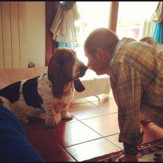 Basset hound love...