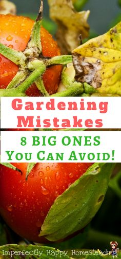 Gardening Mistakes - 8 BIG ONES You Can Avoid. Fix these common gardening mistakes for a healthier vegetable garden.