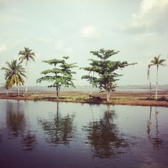 India / The backwaters