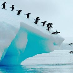 IF YOU HAVE A BIG MOUNTAIN TO CLIMB REMEMBER HOW MUCH FUN IT WILL BE WHEN YOU GET OVER IT!! #journey #mountain #longterm #perspective #success #successful #successquotes #mindset #wednesday #wednesdaywisdom #motivated #motivation #motivationalquotes #humpdaymotivation #penguin #penguins #wildlife #wildlifephotography #nature #naturephotography #wildlifeofinstagram #antarctica #penguinsofinstagram