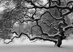 Nature Photography  Winter Tree  Landscape  by JoshFriedmanPhoto