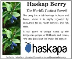 The Haskap Berry - fruit of longevity. 5 times more powerful than blueberries. Fights inflammation. Look for it in frozen berries, jams, wines.