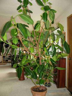 Best Houseplants That Purify the Air | StethNews