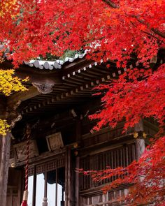 京都の紅葉穴場絶景スポット!京都の「勝持寺」の紅葉が美しすぎると話題2016