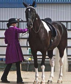 http://beautifulhorsepictures.com/ready-for-show-horses/?utm_source=ReviveOldPost