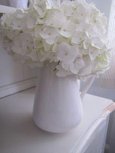 White pitcher & hydrangeas..