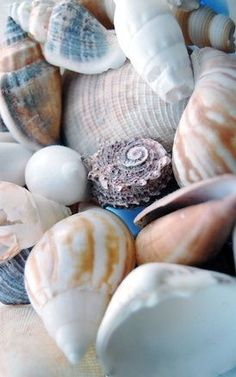 she sells seashells by the seashore
