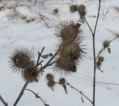 Winter Foraging - Excellent article from Eat the Weeds. Discusses many options, and different climates.
