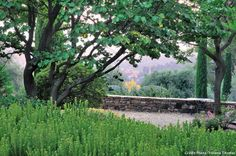 Buissons de myrte et muret en pierre sèche.