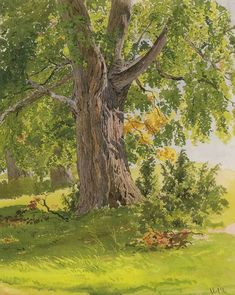 Sunny Oak by Ivan Ivanovich Shishkin - Hand Painted Oil Painting Watercolor Trees, Watercolor Landscape, Landscape Art, Landscape Paintings, Watercolor Paintings, Landscapes, Happy Paintings, Texture Painting, Painting Grass