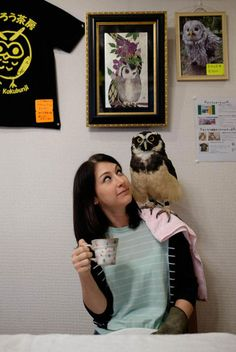 Owl Cafe! Do you want one lump or twit twoo?  The Fukuro no Mise, in Tsukishima, Tokyo, offers drinkers the chance to get up close and personal with some feathered friends. From the big to the little to the somewhat weird looking - there's an owl for every taste at this unique spot