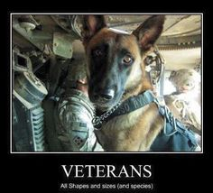 US Military Working Dogs. (Memorial Day tribute to America's military working dogs) Military Working Dogs, Military Dogs, Police Dogs, Military Life, Military Veterans, Military Service, Military Honors, Honor Veterans, My Champion