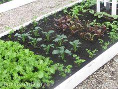 20+ Ideas for your home veggie garden - tradional kitchen garden