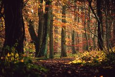 bluepueblo: Primeval Forest, Skipton Woods, England photo via navid Visit Yorkshire, North Yorkshire, Autumn Forest, Autumn Fall, England And Scotland, Exotic Places, British Isles, Les Oeuvres, Places To See