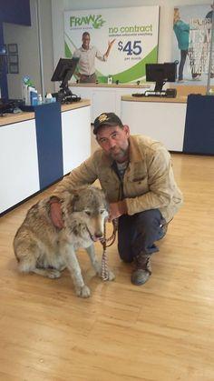 #PayItForward  Lets help the wolves ...