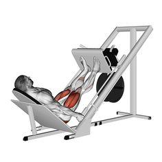 Gym Workout Tips, Dumbbell Workout, Workout Videos, Leg Press Workout, Exercise Videos, Leg Curl, Workout Posters, Calf Raises, Plyometrics
