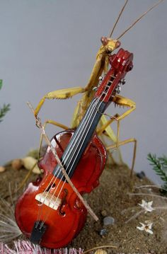 Praying Mantis Playing Cello- insect diorama by Lisa Wood
